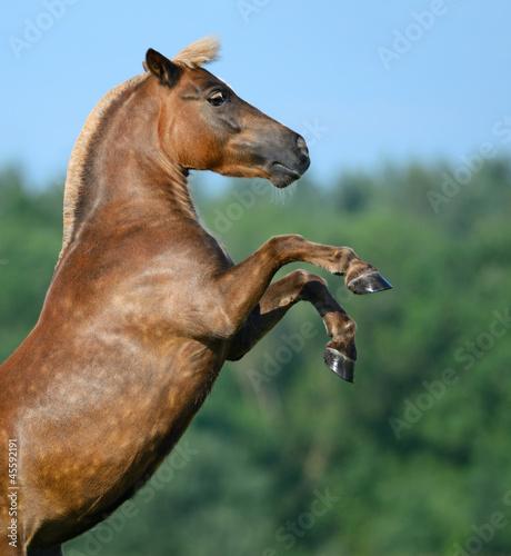 Fototapeten,hochlagern,pferd,pony,rückseite