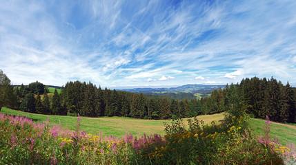 schwarzwald im sommer