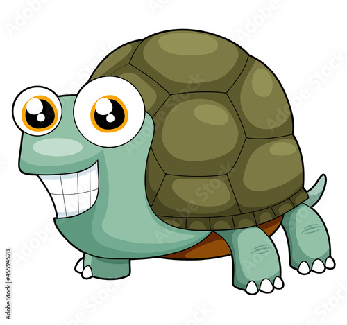 illustration of turtle vector