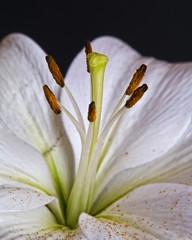 Retrato de una flor