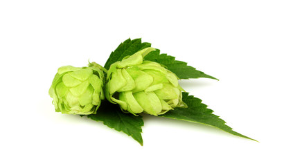 Hops with leave