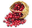 Cranberries near the basket