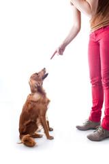 Enseñando a tu perro