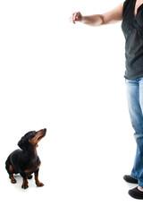 Chica joven entrenando a perro