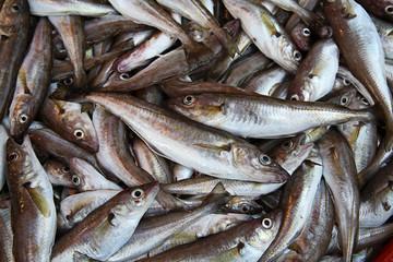 Fische am Markt