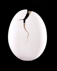 Abriendo un huevo, el nacimiento.Nueva vida.