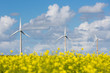 Dutch wind turbines behind a yellow coleseed field