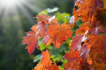 Baum im Herbst mit Sonne