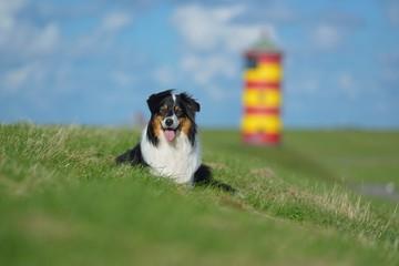 Australian Shepherd mit Pilsumer Leuchtturm