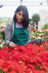 Woman holding a tablet while checking flowers