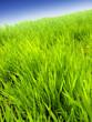 Leinwandbild Motiv grass and  sky