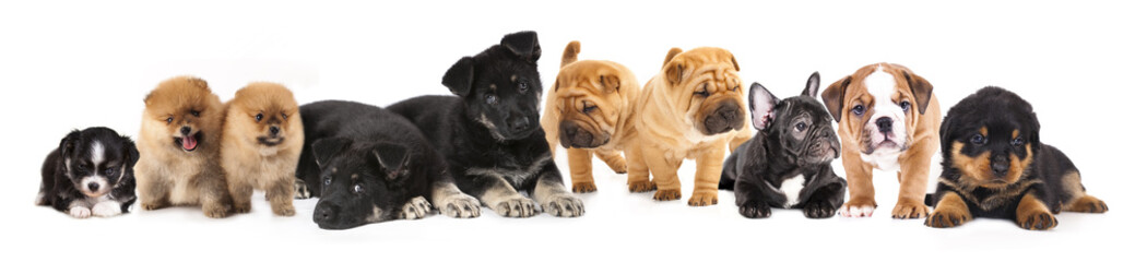 Group of  Puppies of different breeds