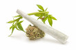Hemp (cannabis)