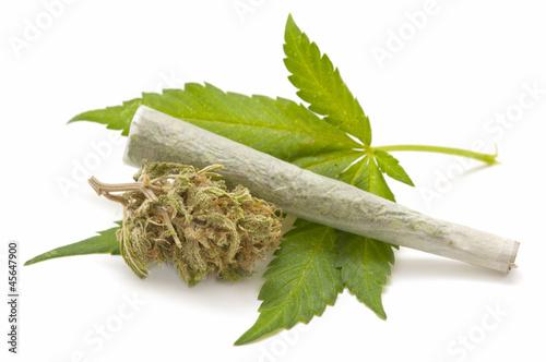 Poster Hemp (cannabis)