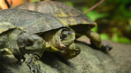 Turtles resting on a tree log