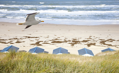 Dutch little houses on beach with seagull