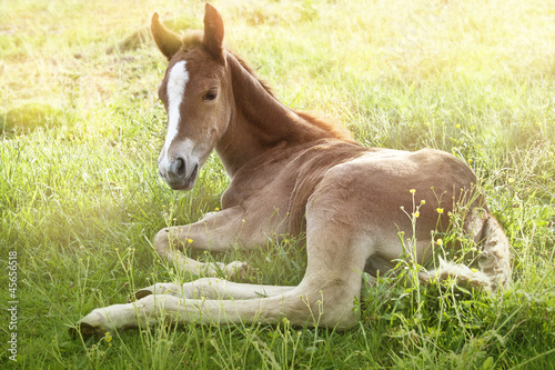 foal in the morning sun