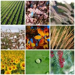 COLLAGE, PLANTAS, COLORIDO, HIERBAS, PRIMAVERAL, ESTACIÓN