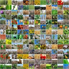 COLLAGE, DIVERSIDAD PLANTAS AGRÍCOLAS, SILVESTRES, RURALES