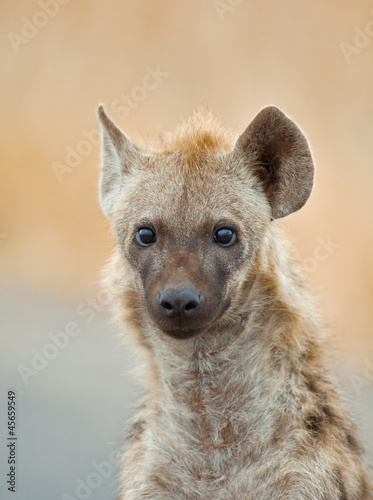 Papiers peints Hyène Hyena portrait