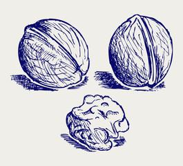 Walnut. Doodle style