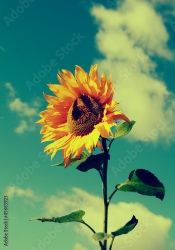 retro vintage sunflower