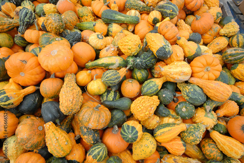 variety of squash and pumpkins