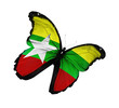 Myanmar flag butterfly flying, isolated on white background
