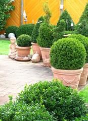Gartengestaltung mit Buchsbäumen