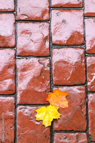 Autumn leaves on cobblestone road