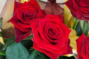 Beauty Red Roses