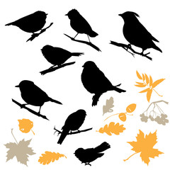 Birds and Plants Silhouettes