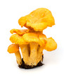 Yellow chanterelle isolated on white