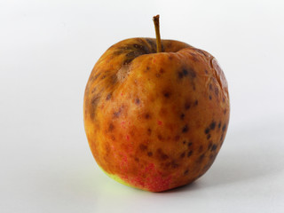 apple spoiled on white background