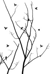 branches with birds