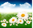 Nature background with beautiful flowers. Vector