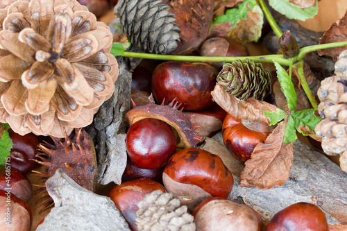 Pine cones and chestnuts in basket