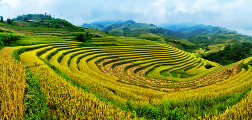 Terraced rice fields in Vietnam.