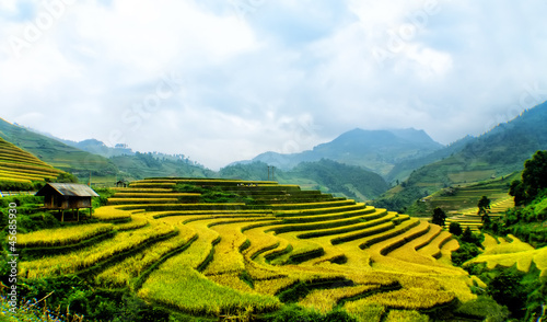 Tarraces Rice filed, Yen bai, viet nam