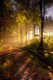 Fototapety Herbst im Naturpark Saar-Hunsrück