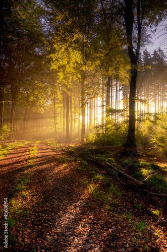 canvas print picture Herbst im Naturpark Saar-Hunsrück