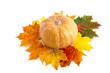 Muskatkürbis und Herbstblätter