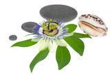 passionflower with stones and one cockleshell on a leaf