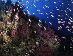 pesci rossi acquario mediterraneo