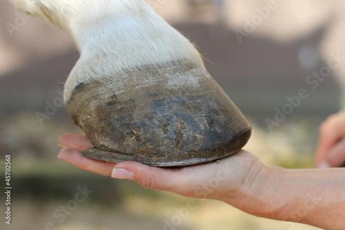 Leinwanddruck Bild Pferde - Hand hält Huf