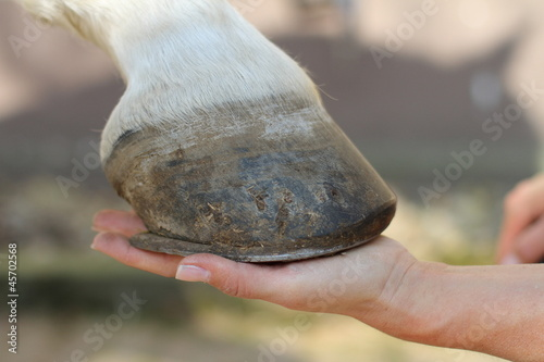 Pferde - Hand hält Huf - 45702568