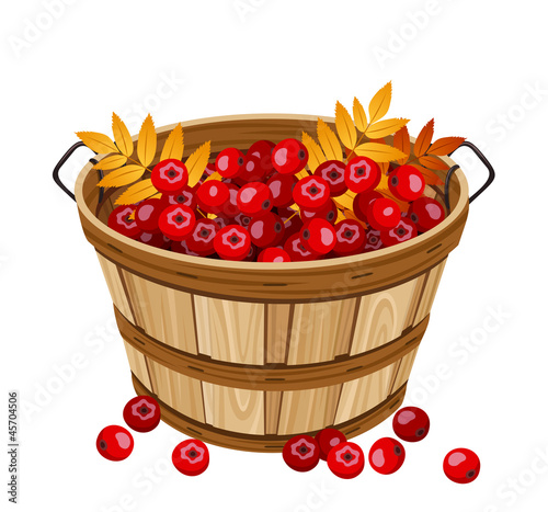 Vector illustration of basket with cherries.