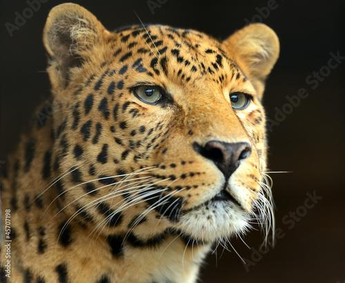 Fototapeten,afrika,tier,aufmerksam,hintergrund