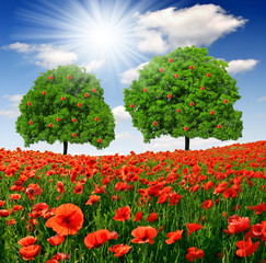 apple trees with red poppy