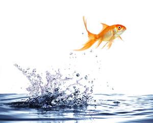 salto del pesce rosso